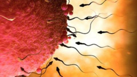 Επιστήμονες χρησιμοποιούν κύτταρα του δέρματος για να δημιουργήσουν ωάρια και σπερματοζωάρια!